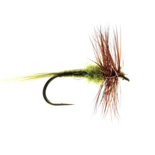 Hatching Olive Hackled Dry (Size 16)