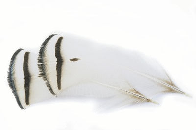Amherst Tippet Feather
