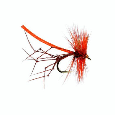 Orange Lanky Daddy  (Size 10)