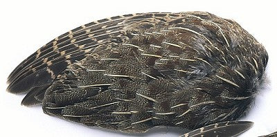 Partridge English Grey Whole Wings