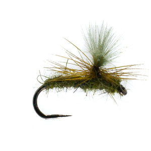 Barbless Universal Olive