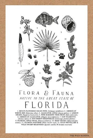 Field Guide to Florida