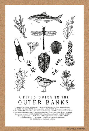 Field Guide to the Outer Banks