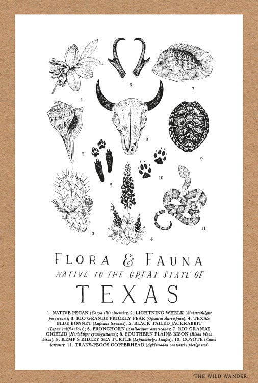 Texas Flora and Fauna Field Guide