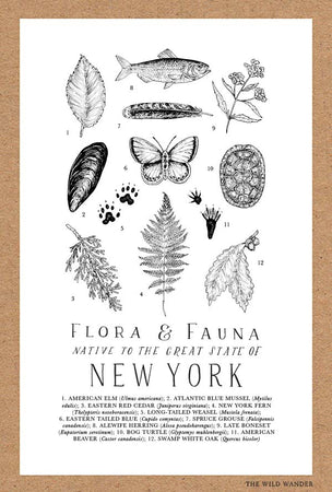 Field Guide to New York