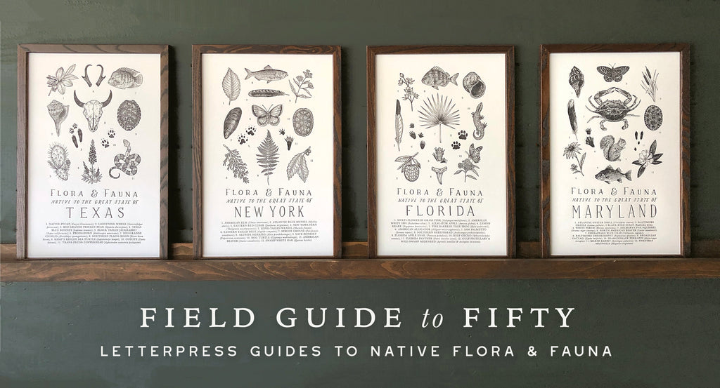 Letterpress field guide prints with illustrated wildlife in wooden frames on a forest green background