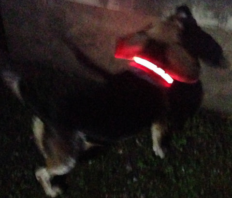 Lit up Solar Powered LED Collar