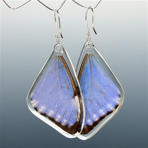 Blue Morpho Adonis Butterfly Top Wing Earrings