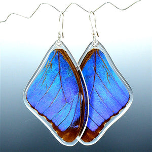 Blue Morpho Butterfly Top Wing Earrings