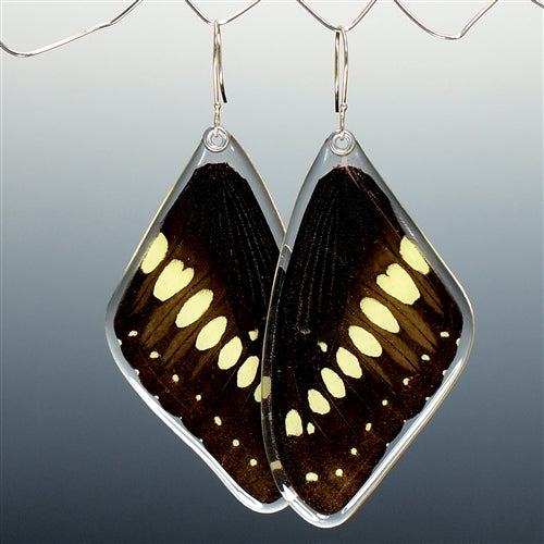 Emperor Swallowtail Butterfly Top Wing Earrings
