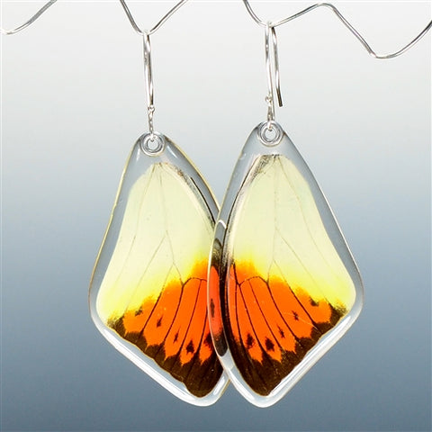 Hebomoia Glaucippe Butterfly Top Wing Earrings