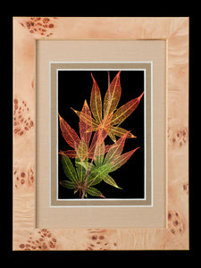 Japanese Maple Leaves with Maple Wood Frame