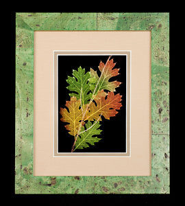 Black Oak Leaves in Green Frame