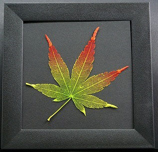 Etched Leaf Coasters