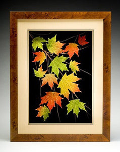 Sugar Maple Leaves in Maple Frame