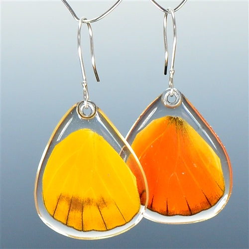 Orange Albatross Butterfly Bottom Wing Earrings