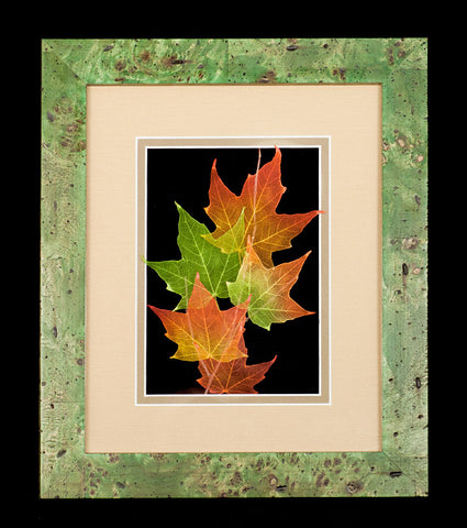 Sugar Maple Leaves in Green Frame