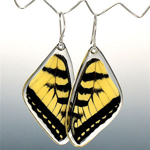 Tiger Swallowtail Butterfly Top Wing Earrings