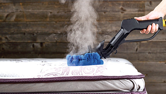 Exterminate bed bugs.