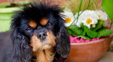 May's Dog of the Month - Mye