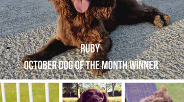 October - Dog of the Month