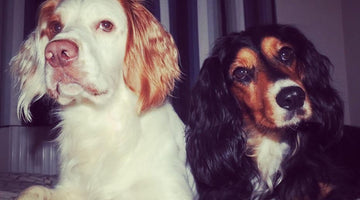 Hope & Muse - April's Dog of the Month winners