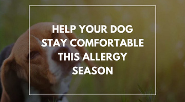 Help your dog stay comfortable this allergy season