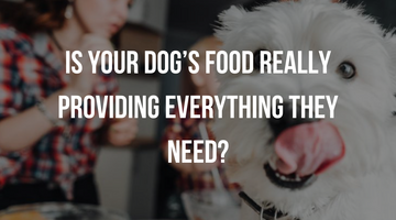 Guest Writer – Caroline Griffith: Is Your Dog's Food Really Providing Everything They Need?
