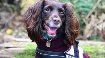 March Dog of the Month - Poppy