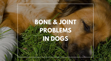 Bone & Joint Problems in Dogs