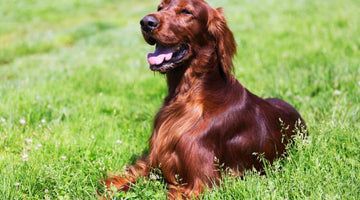 How to keep your dogs skin and coat healthy