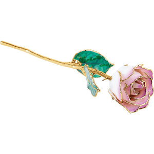 24KT Lacquered Cream Picasso Rose