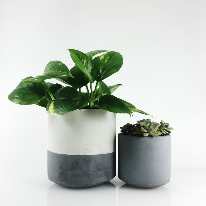 straight sided concrete pots