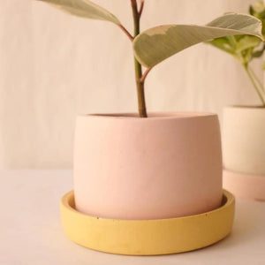 medium concrete colour plant pots