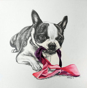 That's My Thong Boston Terrier Original Drawing