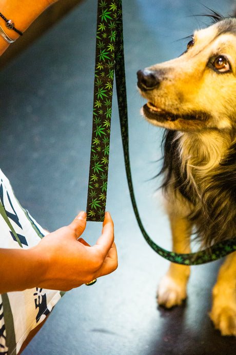 Dog Leash Canna Leaf Print