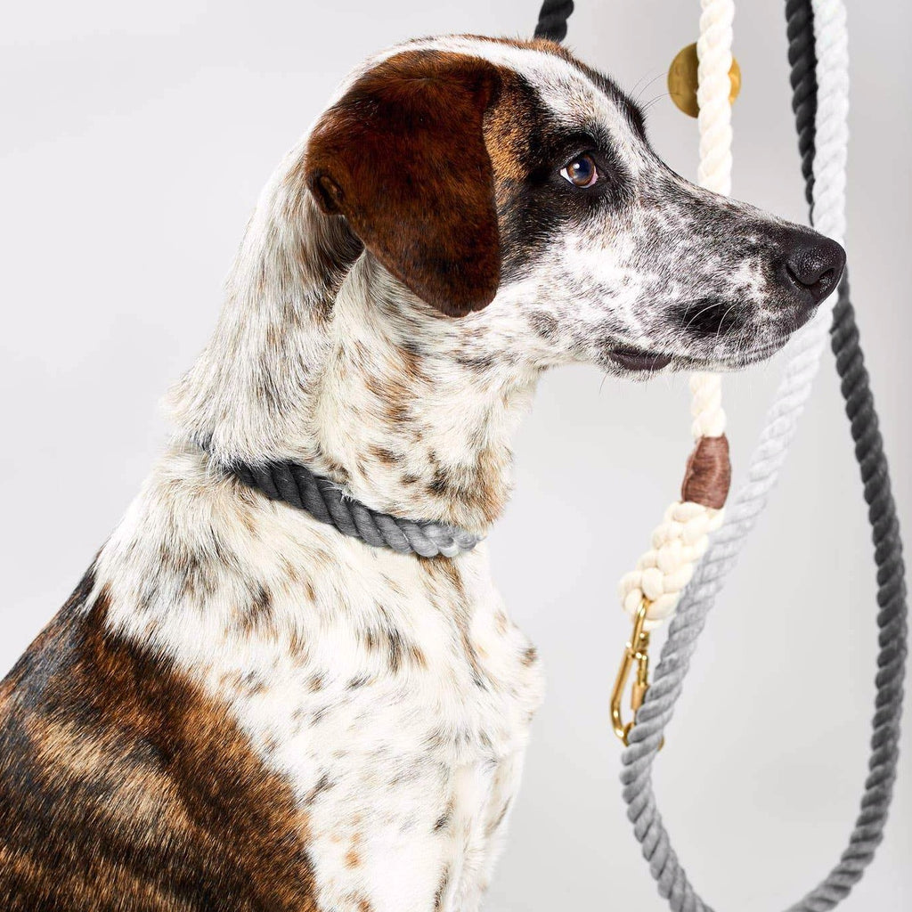 Found My Animal Black Ombre Rope Dog Leash