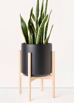 Classic Ceramic Planter + Natural Wood Stand Set