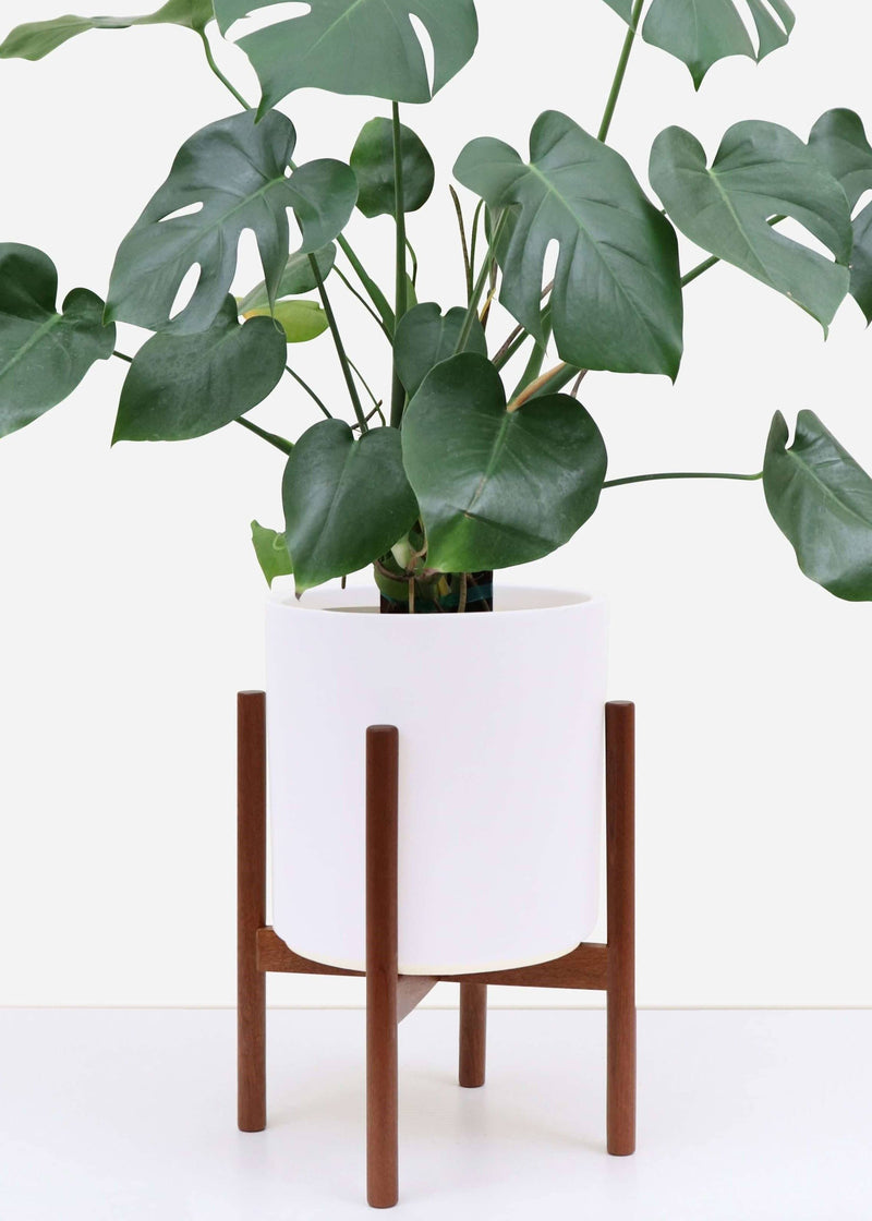 Classic Ceramic Planter + Maple Wood Stand Set