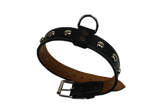 Black Dog Collar with Round Silver Studs