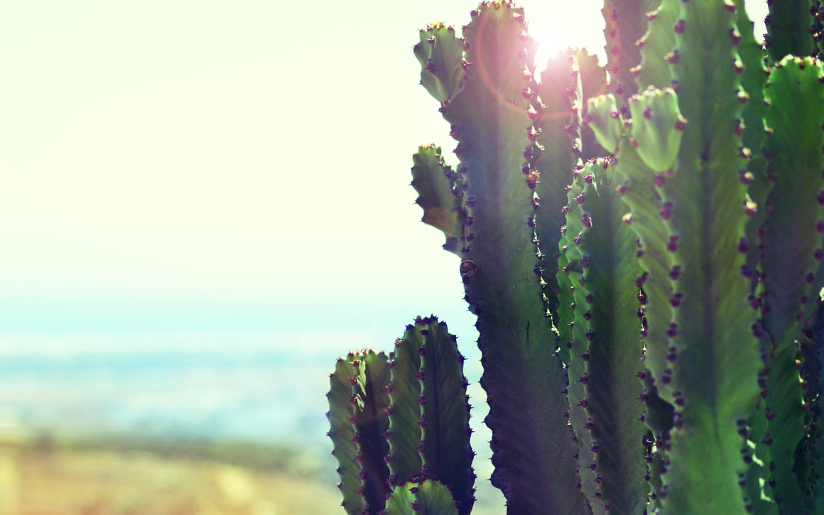 cactus photography wall art canvas print seaside image