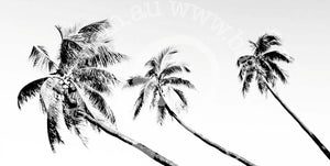 palm tree canvas wall art by andy baker of bald art