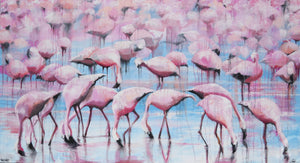 In search of flamingos