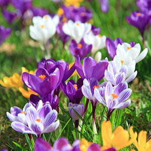 The Best Companion Plants for Bulbs