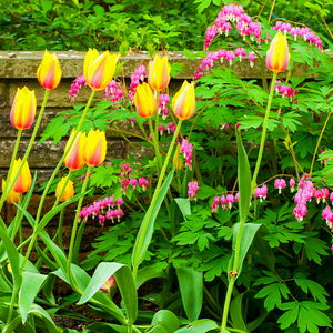 What To Plant With Tulips