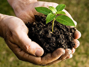 Synthetic vs. Organic Fertilizer