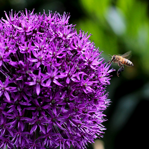 Top 3 Bulb Collections for Pollinators