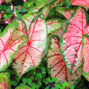 Big, Bold Foliage Plants