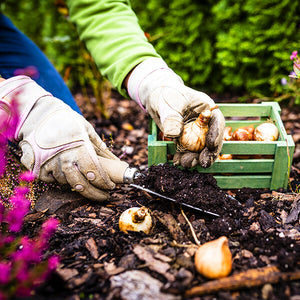 Planning Your Fall Plantings