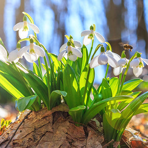 How to Plant Bulbs for Staggered Blooming
